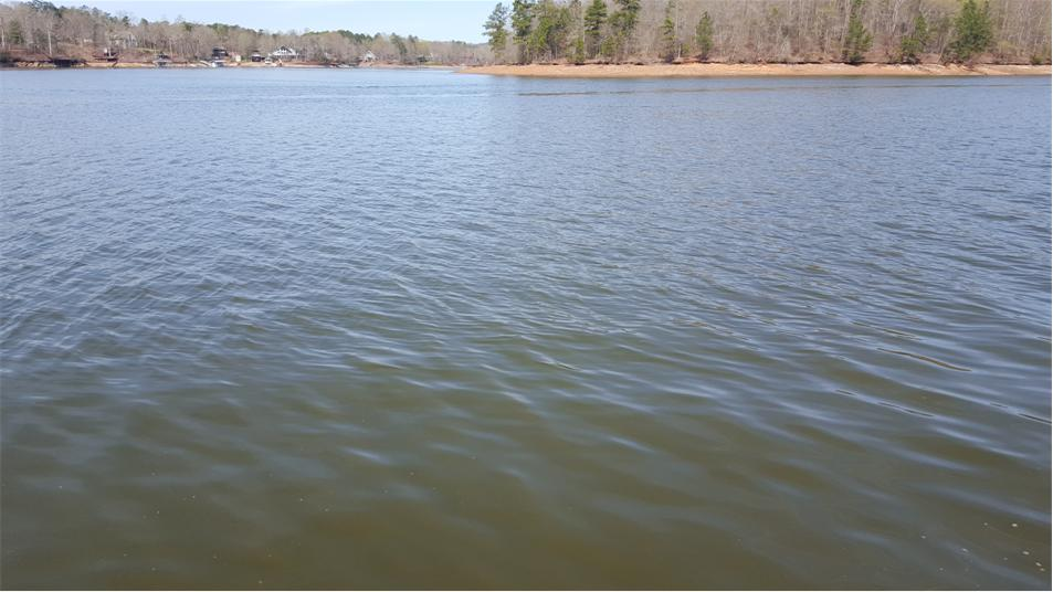 The fishin web water level clarity and temperature update for Wedowee lake level